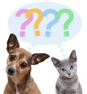 Veterinaria - Preguntas