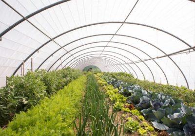 invernadero-hortícola